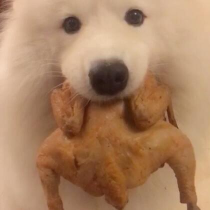 上周周末忘记给布宝买烤鸡了,一天天念叨!好吧!😋#宠物##汪星人##吃秀#