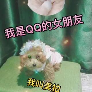 大家好 我是QQ的女朋友 我叫美拍 #宠物变身秀##萌宠#大家喜欢我吗 喜欢我的话下方评论哦 哈哈哈爱你们@Hello大坤哥👱 @大坤哥小思妞的QQ糖