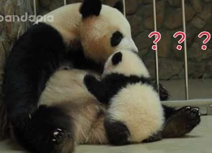 #萌团子陪你过周末# 孩子啊,你为什么蹲着喝奶呢?胡缩!熊家明明是站着的哼~😁