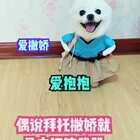 #宠物#喜欢卖萌不树偶滴错😂#精选##我的宠物萌萌哒#
