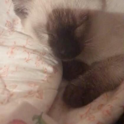你永远叫不醒一直装睡的猫#精选##宠物#@美拍小助手