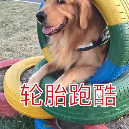 #宠物##搞笑#笑可能不道德,关键是我tm憋不住啊😂😂😂