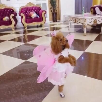 #汪星人#蝴蝶🦋公主美美😘😘😘🔥🔥🔥喜欢美美的小仙女快来抢沙发😘😘😘