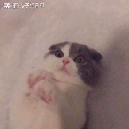 【子猫日和美拍】17-12-09 20:28