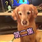 神金电视台、汪界囧事第一季第二集,快来围观@宠物频道官方账号 @美拍小助手 #宠物##汪星人##汪界囧事#