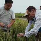 88岁袁隆平3年培育出海水稻,耐盐碱亩产600多公斤,再创世界奇迹#二更视频##牛人##我要上热门#
