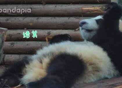 #萌团子日常# 小团子吃独食,不断确认有没有被麻麻跟妹妹发现,真的是个小熊精哦!😀