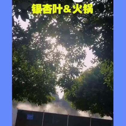17-12-16 14:44转发的美拍视频