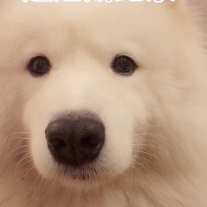 认真看完5分钟视频,你会收获不少惊喜!#精选##宠物#