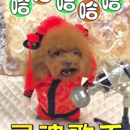 #宠物##搞笑##汪星人#灵魂歌手😂