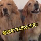 有谁和尼扣是一样一样的吗?@宠物频道官方账号 @美拍小助手 #女生笑的时候##宠物##精选#