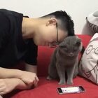 不怕打牌输,重点有得亲#精选##宠物##喵星人#