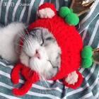 唯有美食可唤醒一只装睡的猫。#宠物##我的猫咪是逗比# 【Gu猫coffee】