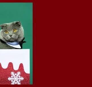 不是一家人不进一家门,你有没有觉得,生活久了,你的宠物和你越来越像?本期的#路人大改造#,iEVER就邀请了5组#萌宠#家庭,在圣诞节前夕,一起拍摄了这条萌趣又温馨的大片。你觉得哪对最像?#美妆#