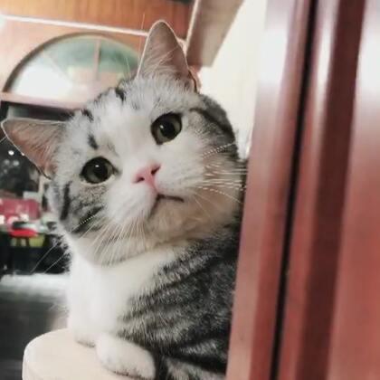 Gu猫的小乖乖们~~~