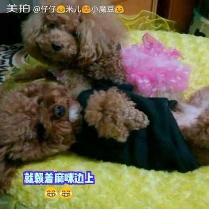 小魔豆小赖皮😜😜赖在麻咪身边不去睡觉觉😘😘#宠物##我的宠物萌萌哒##小魔豆一家#