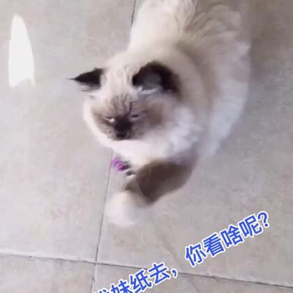 我的猫生也需要爱,爱我的妹纸在哪里?鼓励我一下吧❤,我也要去寻找爱!❤