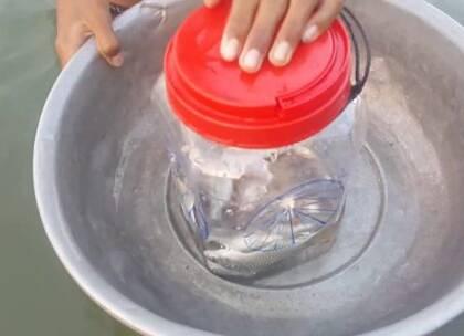 用一个塑料瓶子抓鱼,注意,没有成年人陪同不要下水哦,其实可以用一根绳子拴住,里面灌满水再方块石头,扔进水里就行了,做这么四五个瓶子,扔到河里或者池塘里,第二天等着吃鱼吧😂#手工##生活小技能#