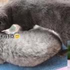 致我们单纯的小美好#宠物##致我们单纯的小美好#