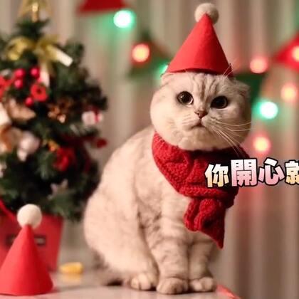 以前戳的猫毛又发挥作用了😂😂还可以做圣诞帽 做工老粗糙了哈哈哈 勉强戴着还能拍拍照😛#宠物#一起来过圣诞吧#圣诞节#