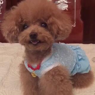 #宠物#-💖公主-甜心💖-公主:麻咪,伦家忍耐也是有限捏啦😒(哈哈,对俺的要求很不满呢,小丫头👸发飙啦🙈)#我的宠物萌萌哒##穿秀#