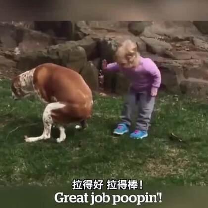 汪:你给我走开,让我好好拉屎!!!😂😂😂#搞笑##宠物##宝宝#