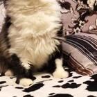 一只拒绝拥有合格证的17😹😹😹#猫咪##萌宠#