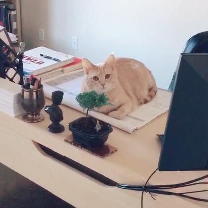😂😂司总又在办公呢~~#宠物#
