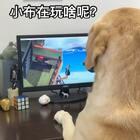 """#小布的日常生活# """"如果小布是个方案设计师"""" #搞笑##宠物#"""