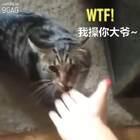 当你在外面摸了别的猫之后。。。😂😂😂#搞笑##宠物#