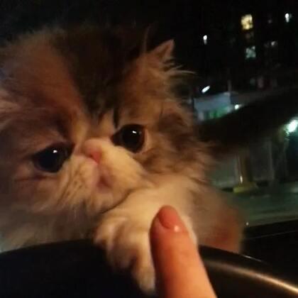 #加菲猫##加菲猫的幸福生活#到新家了😘
