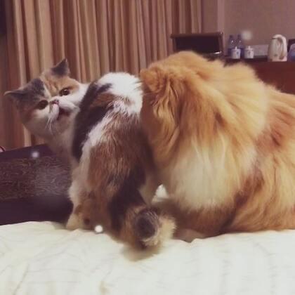 #加菲猫##加菲猫的幸福生活#可可好凶哦😉