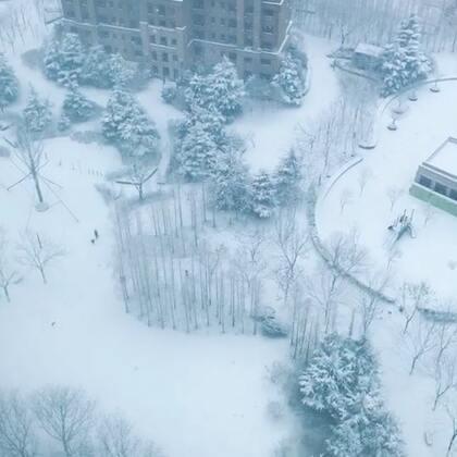 早上起来后拉开窗帘 哇塞 白茫茫的一片 还在哗哗下大雪 小姨在来的路上 还有一个朋友中午飞过来 希望不会晚点呀 雪应该快停了#热门##精选##风景#