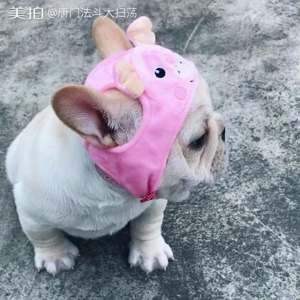 这个帽子更适合猪,给我拿下来!#宠物##法国斗牛犬##唐门法斗先生#