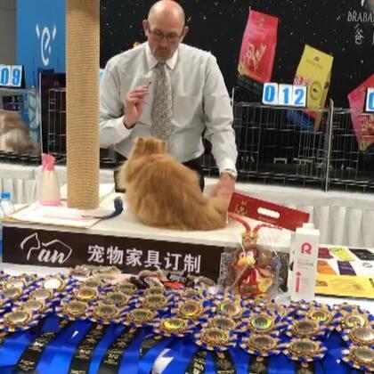 #加菲猫##加菲猫的幸福生活#第四赛环🌸