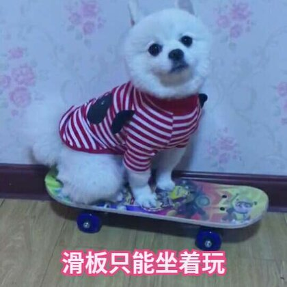 #3ar##宠物#仔仔表示不会玩滑板😂#精选#