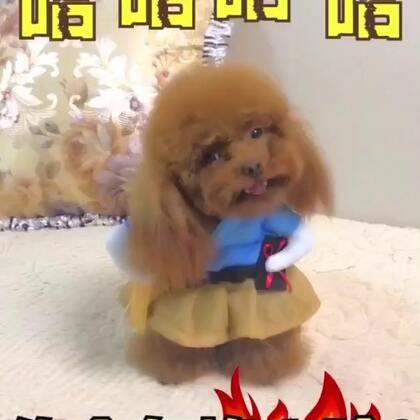 #宠物##搞笑##汪星人#你今年挣了个啥😂