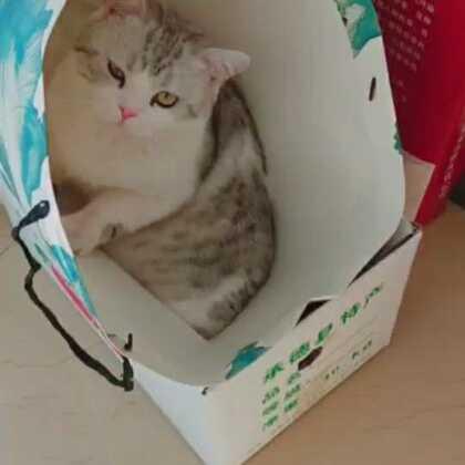 有个袋子就钻 #宠物##日志##精选#@宠物频道官方账号 @美拍小助手