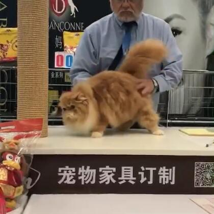 #加菲猫##加菲猫的幸福生活#第三赛环🌸