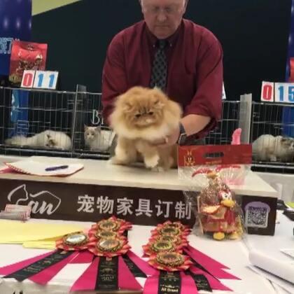 #加菲猫##加菲猫的幸福生活#第二赛环🌸