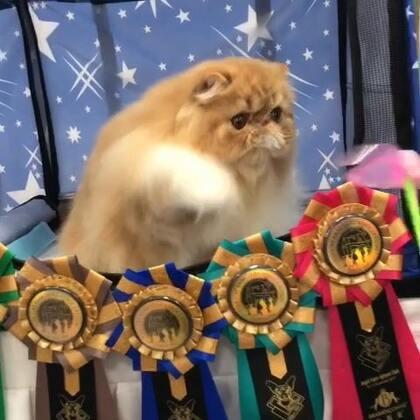#加菲猫##加菲猫的幸福生活#❤️