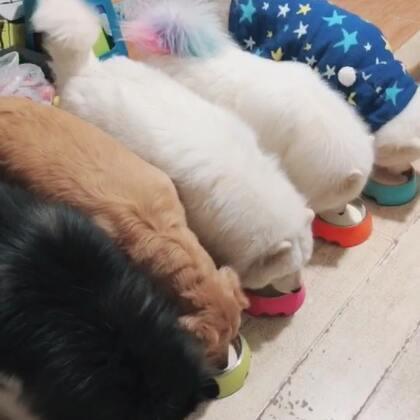 一堆小馋狗#宠物#