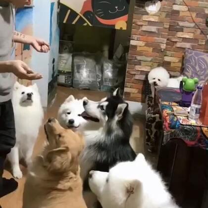 跟我走吧哈哈#宠物#