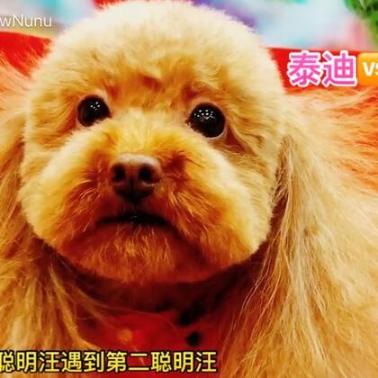 麻麻带我修毛毛遇到了传说中比我还聪明的边境牧羊犬 可是一点都看不出来耶 还是我最聪明 哼 #宠物##熊妹美美哒##热门#