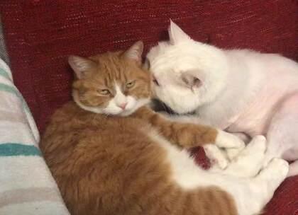 是大咪也开始吸猫了还是小咪最近母爱泛滥了? #搞笑##宠物##我要上热门#