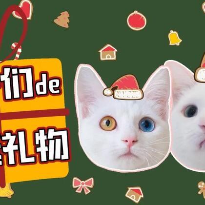 mimo:最后那份礼物是认真的吗?!! 朕生气了!! ✨关注并转赞评,下周抽两位送出圣诞水晶球✨#宠物##mimo##我们养猫吧#
