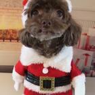 #宠物#圣诞就要到啦🎄小盆友们收到礼物了吗🎁逗宝提前祝大家圣诞节快乐🎅👯♀️👯♀️另外再给小朋友们介绍一个宠物医生有问题可以加微信咨询哦douchai725