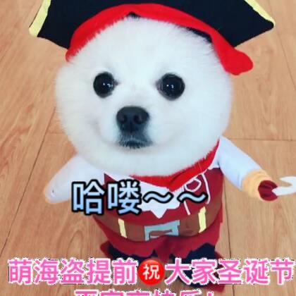 #宠物##我的宠物萌萌哒#萌萌滴小海盗来啦😜#精选#