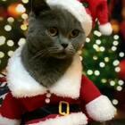 圣诞猫偶娃娃!提前㊗️美拍里的哥哥姐姐叔叔姨姨们圣诞节快乐🎉🎊🎅🎄🎁😘#宠物##精选#