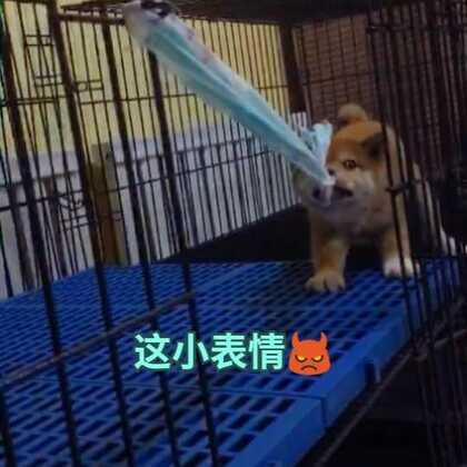 #宠物##精选##荒野花式浪#如果有时间 记得陪陪家中宠 让他开心 其实真的挺容易的